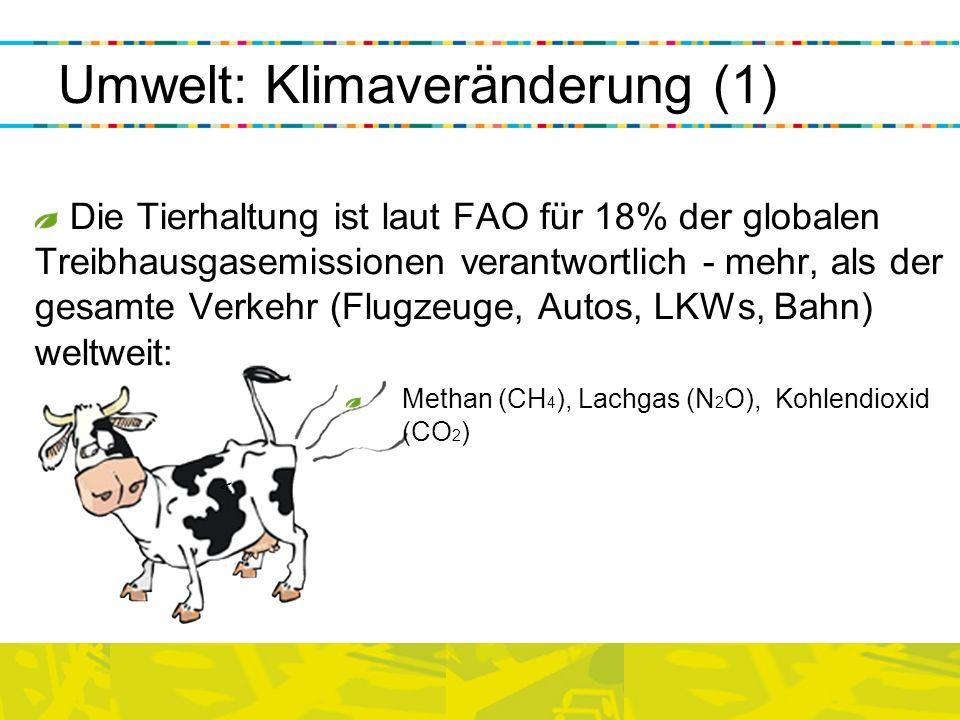 < Die Tierhaltung ist laut FAO für 18% der globalen Treibhausgasemissionen verantwortlich - mehr, als der gesamte Verkehr (Flugzeuge, Autos, LKWs, Bah