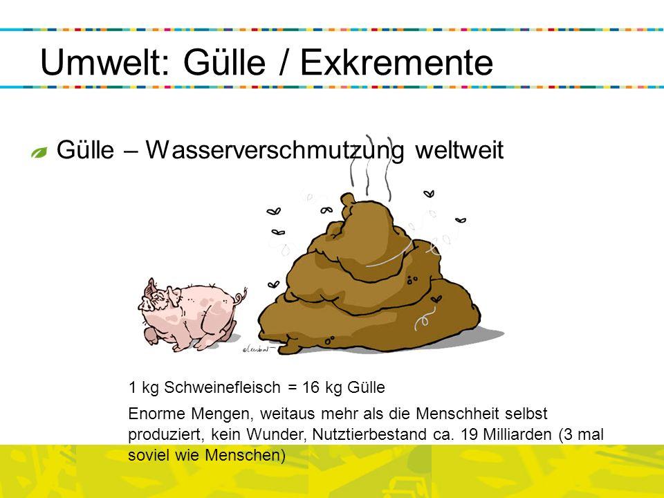 Umwelt: Gülle / Exkremente 1 kg Schweinefleisch = 16 kg Gülle Enorme Mengen, weitaus mehr als die Menschheit selbst produziert, kein Wunder, Nutztierb