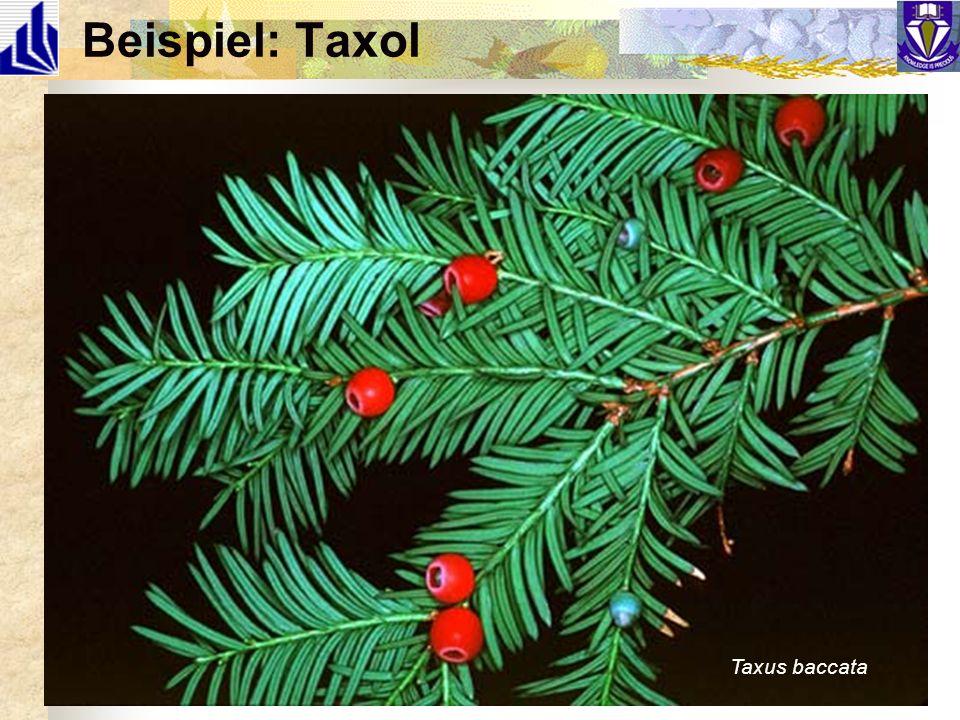 Beispiel: Taxol J Org Chem 1986, 51, 46 Taxus baccata