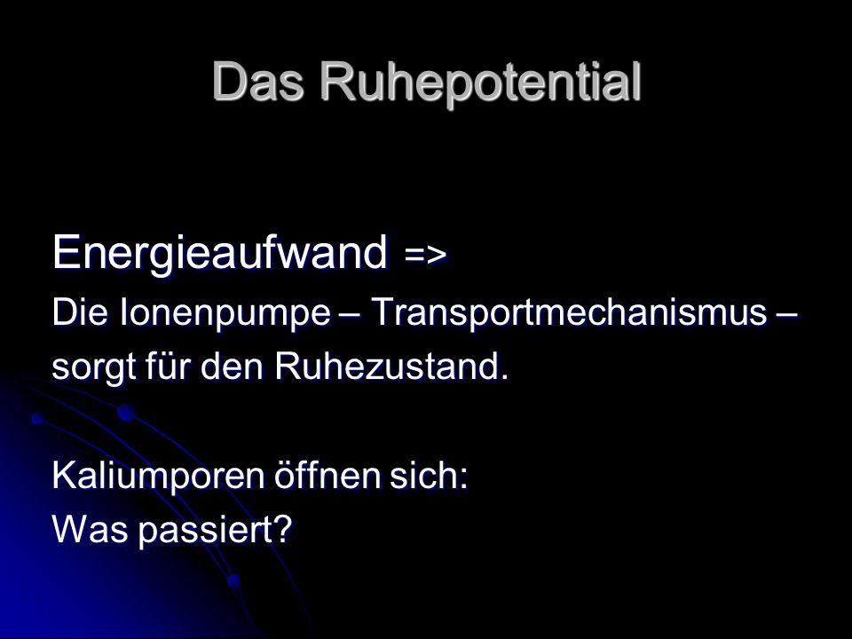Das Ruhepotential Energieaufwand => Die Ionenpumpe – Transportmechanismus – sorgt für den Ruhezustand. Kaliumporen öffnen sich: Was passiert?