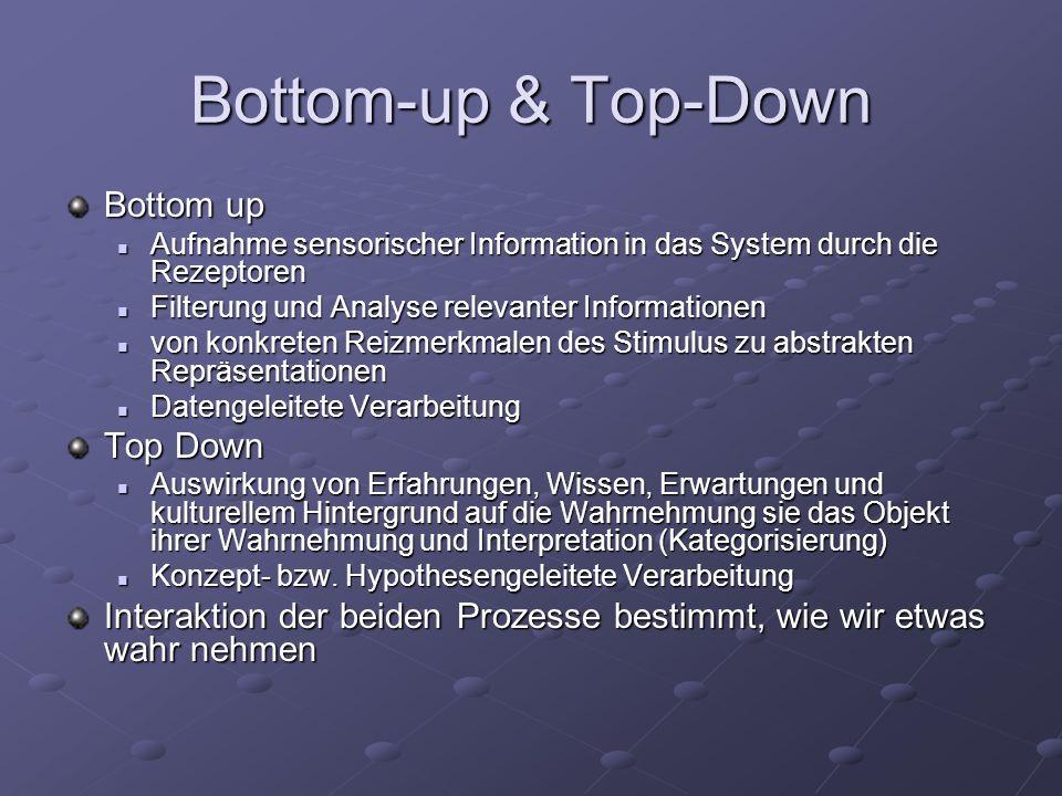 Bottom-up & Top-Down Bottom up Aufnahme sensorischer Information in das System durch die Rezeptoren Aufnahme sensorischer Information in das System du