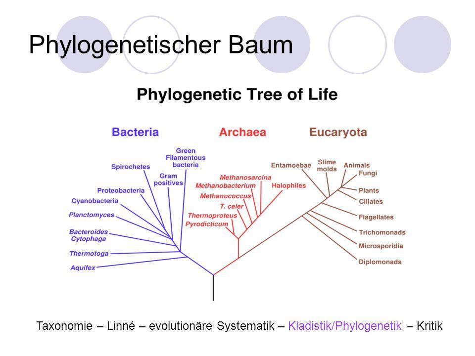 Phylogenetischer Baum Taxonomie – Linné – evolutionäre Systematik – Kladistik/Phylogenetik – Kritik