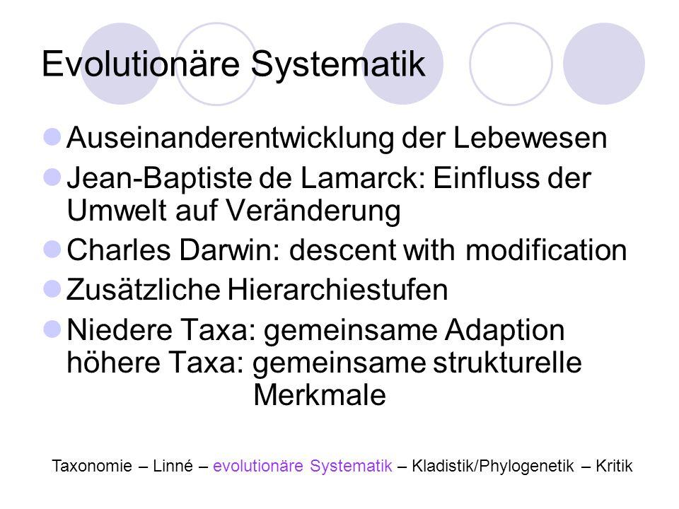 Evolutionäre Systematik Auseinanderentwicklung der Lebewesen Jean-Baptiste de Lamarck: Einfluss der Umwelt auf Veränderung Charles Darwin: descent wit