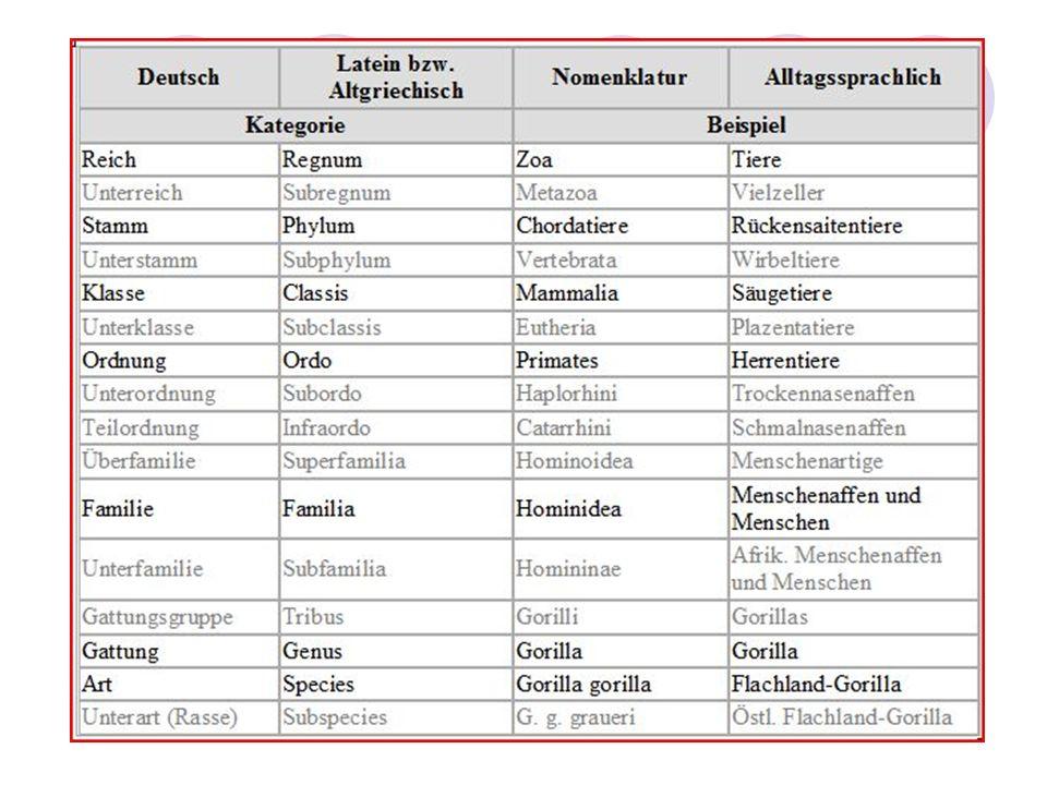 Evolutionärer Stammbaum Grad der Verwandtschaft Taxonomie – Linné – evolutionäre Systematik – Kladistik/Phylogenetik – Kritik