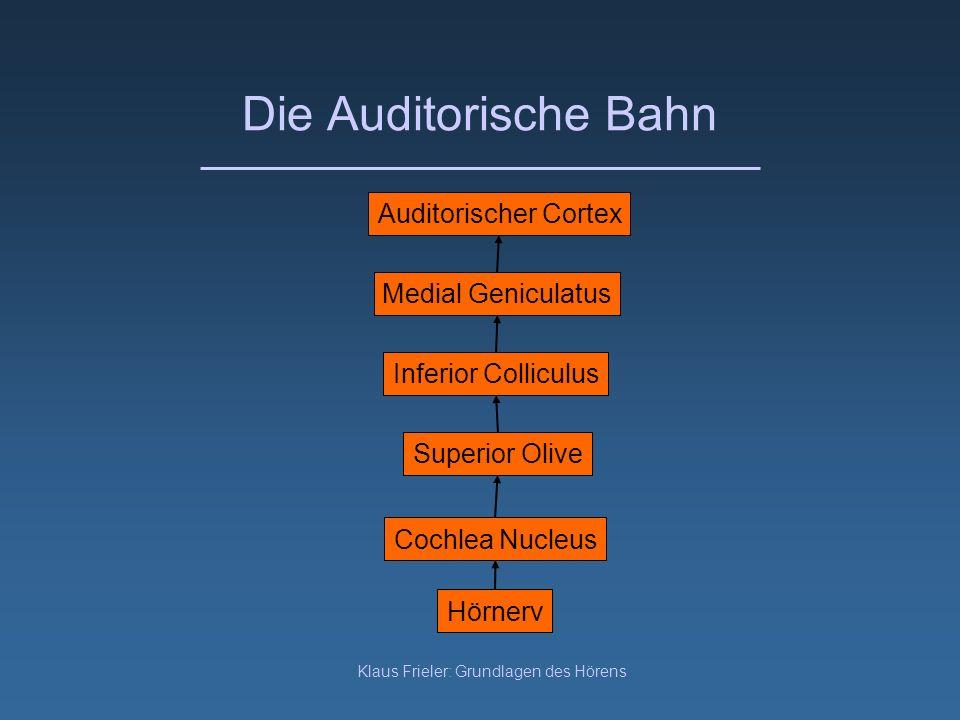 Klaus Frieler: Grundlagen des Hörens Die Auditorische Bahn Hörnerv Cochlea Nucleus Superior Olive Inferior Colliculus Medial Geniculatus Auditorischer