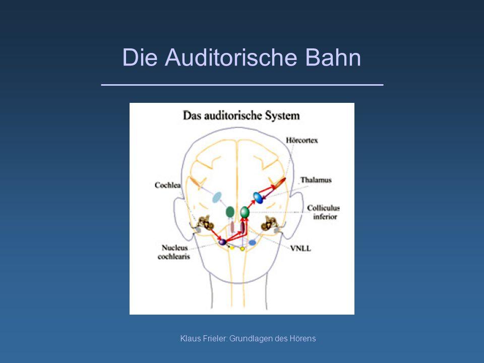 Klaus Frieler: Grundlagen des Hörens Die Auditorische Bahn