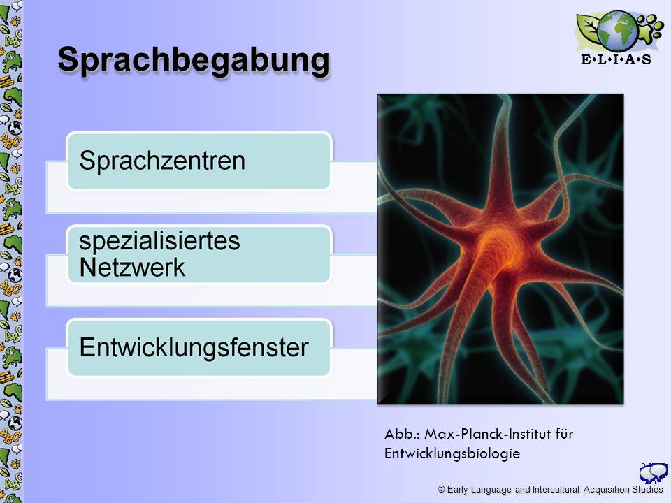 E L I A S © Early Language and Intercultural Acquisition Studies SprachbegabungSprachbegabung 5 Abb.: Max-Planck-Institut für Entwicklungsbiologie