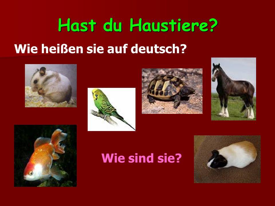Hast du Haustiere? Wie heißen sie auf deutsch? Wie sind sie?