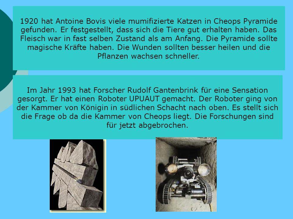 1920 hat Antoine Bovis viele mumifizierte Katzen in Cheops Pyramide gefunden. Er festgestellt, dass sich die Tiere gut erhalten haben. Das Fleisch war