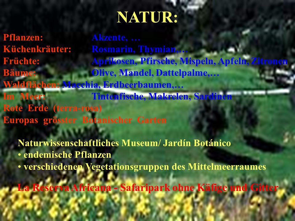 NATUR: Pflanzen: Akzente, … Küchenkräuter: Rosmarin, Thymian,… Früchte: Aprikosen, Pfirsche, Mispeln, Apfeln, Zitronen Bäume: Olive, Mandel, Dattelpal