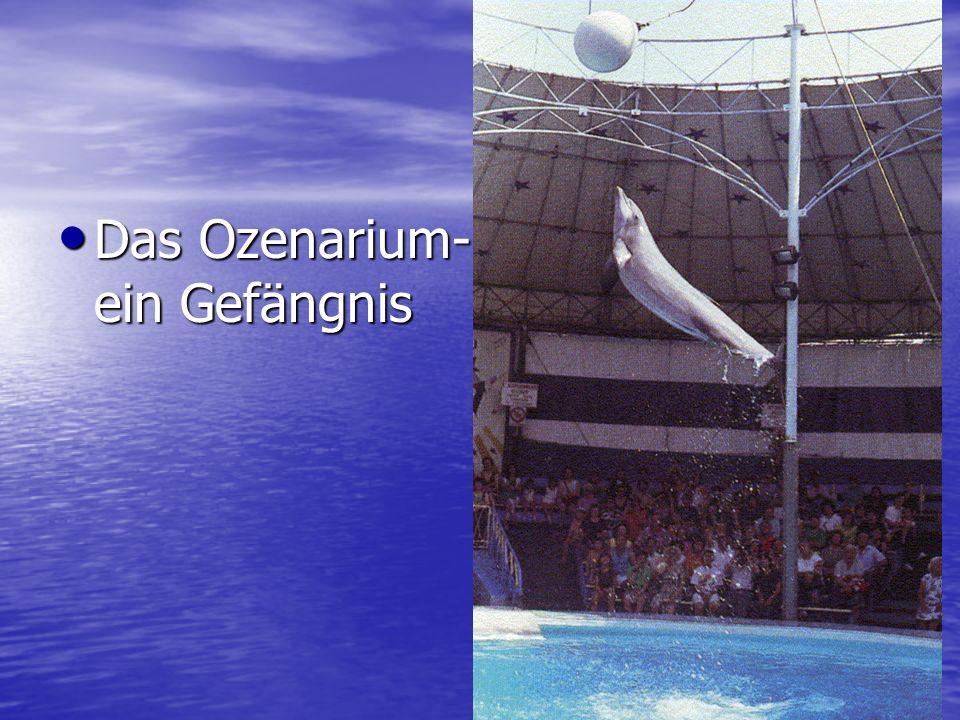 Das Ozenarium- ein Gefängnis Das Ozenarium- ein Gefängnis