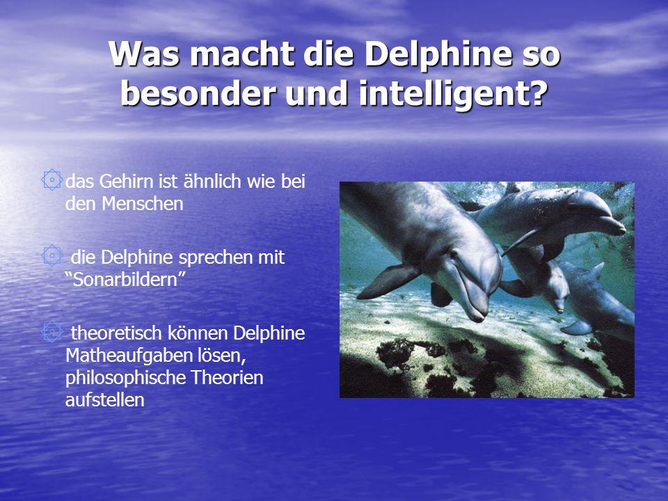 Was macht die Delphine so besonder und intelligent? ۞۞d۞۞das Gehirn ist ähnlich wie bei den Menschen ۞ ۞ die Delphine sprechen mit Sonarbildern ۞ ۞ th