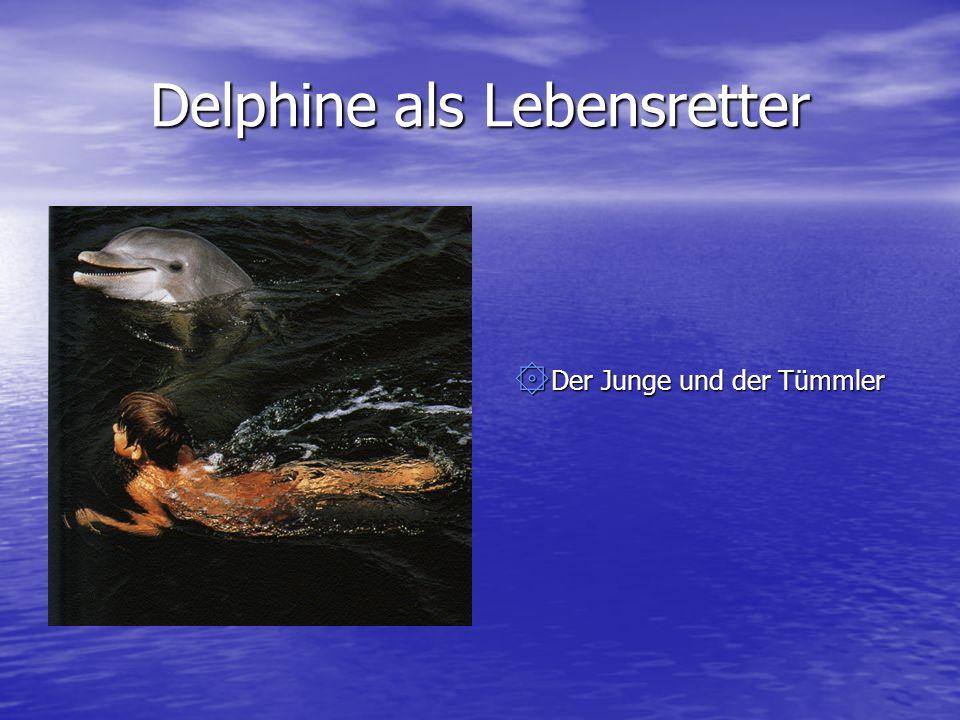 Delphine als Lebensretter ۞ Der Junge und der Tümmler