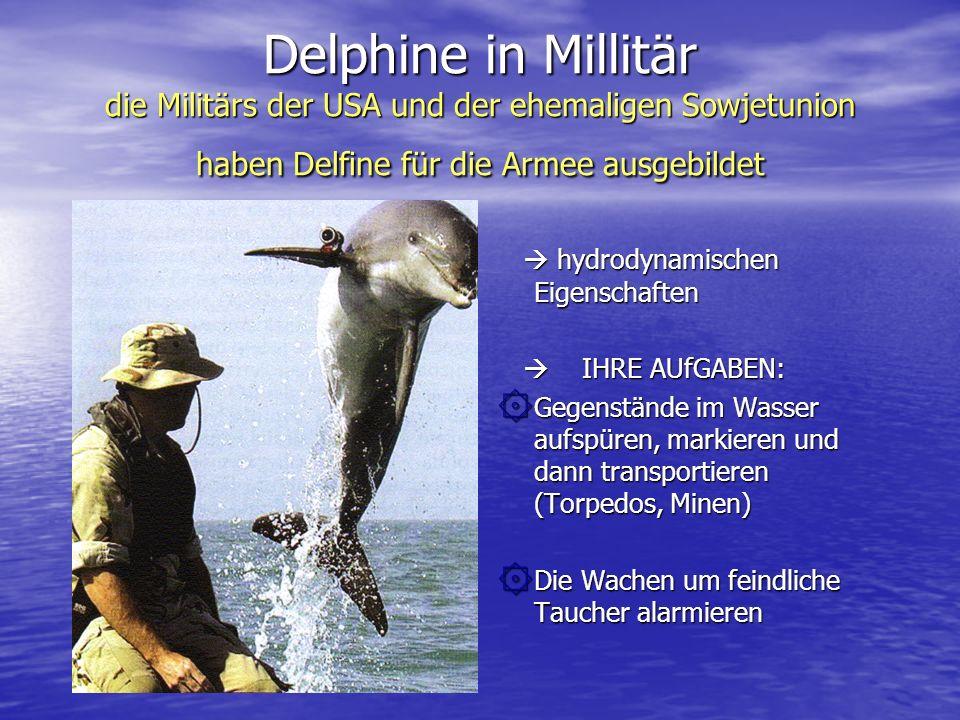 Delphine in Millitär die Militärs der USA und der ehemaligen Sowjetunion haben Delfine für die Armee ausgebildet hydrodynamischen Eigenschaften hydrod
