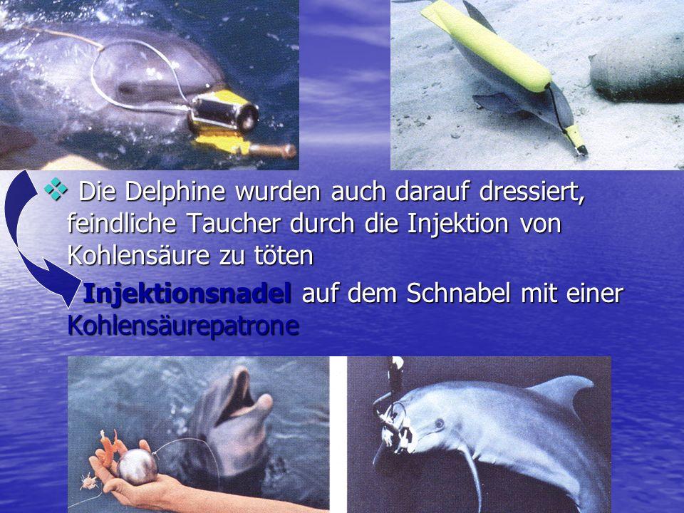 Die Delphine wurden auch darauf dressiert, feindliche Taucher durch die Injektion von Kohlensäure zu töten Die Delphine wurden auch darauf dressiert,