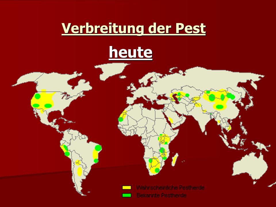 Verbreitung der Pest heute
