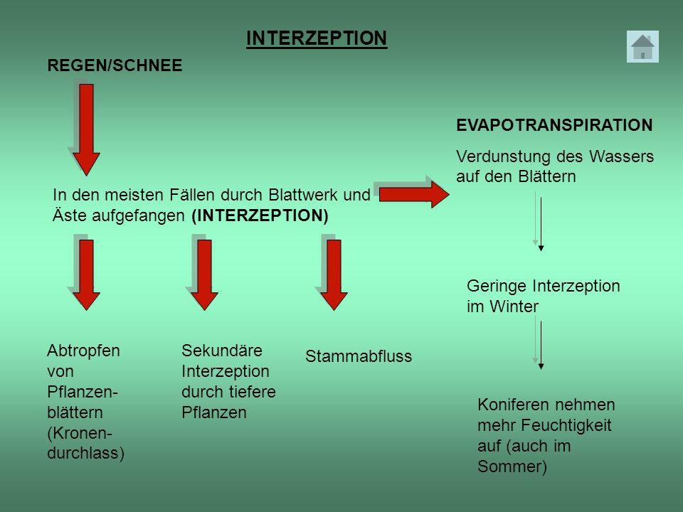 REGEN/SCHNEE In den meisten Fällen durch Blattwerk und Äste aufgefangen (INTERZEPTION) Abtropfen von Pflanzen- blättern (Kronen- durchlass) Sekundäre