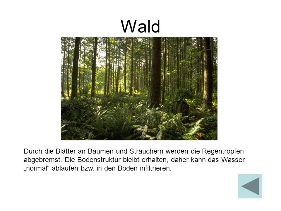 Wald Durch die Blätter an Bäumen und Sträuchern werden die Regentropfen abgebremst. Die Bodenstruktur bleibt erhalten, daher kann das Wasser normal ab