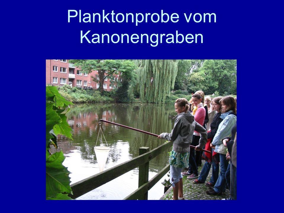 Aasee Marienschule Kanonengraben