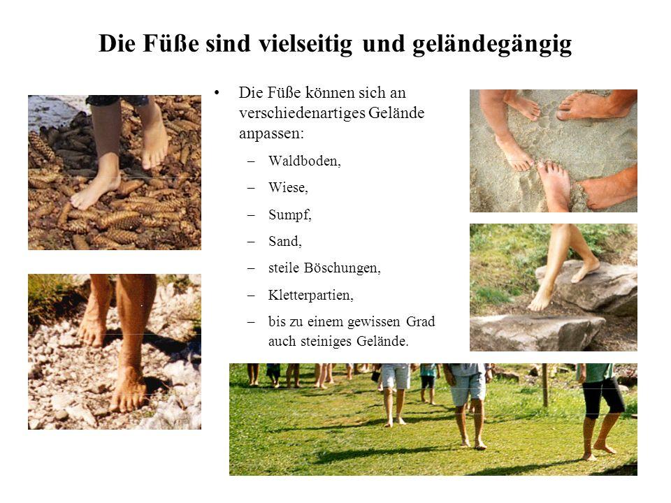 10 Die Füße sind vielseitig und geländegängig Die Füße können sich an verschiedenartiges Gelände anpassen: –Waldboden, –Wiese, –Sumpf, –Sand, –steile