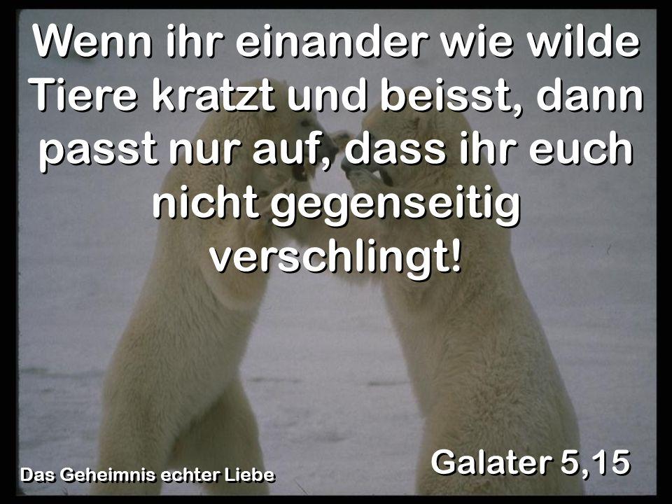 Galater 5,15 Wenn ihr einander wie wilde Tiere kratzt und beisst, dann passt nur auf, dass ihr euch nicht gegenseitig verschlingt!