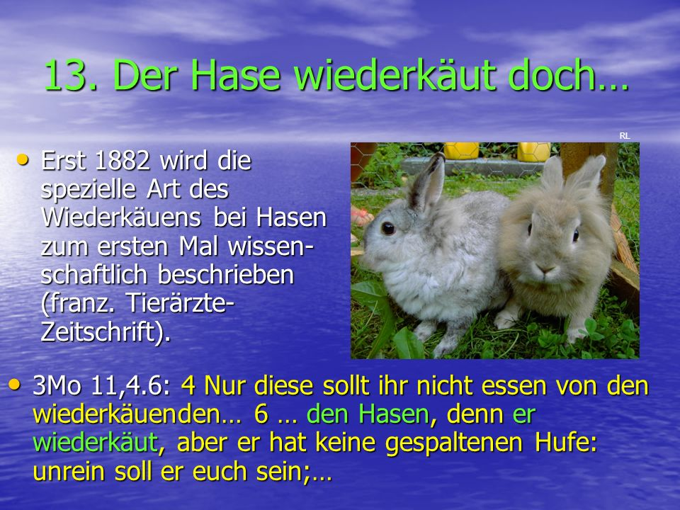 13. Der Hase wiederkäut doch… 3Mo 11,4.6: 4 Nur diese sollt ihr nicht essen von den wiederkäuenden… 6 … den Hasen, denn er wiederkäut, aber er hat kei
