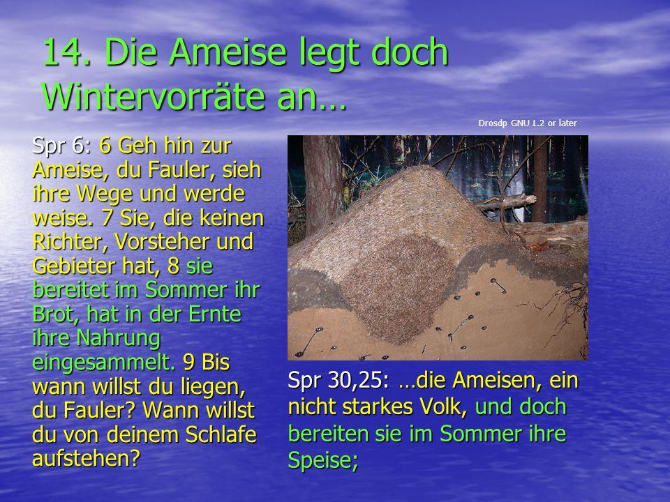 14. Die Ameise legt doch Wintervorräte an… Spr 30,25: …die Ameisen, ein nicht starkes Volk, und doch bereiten sie im Sommer ihre Speise; Spr 6: 6 Geh