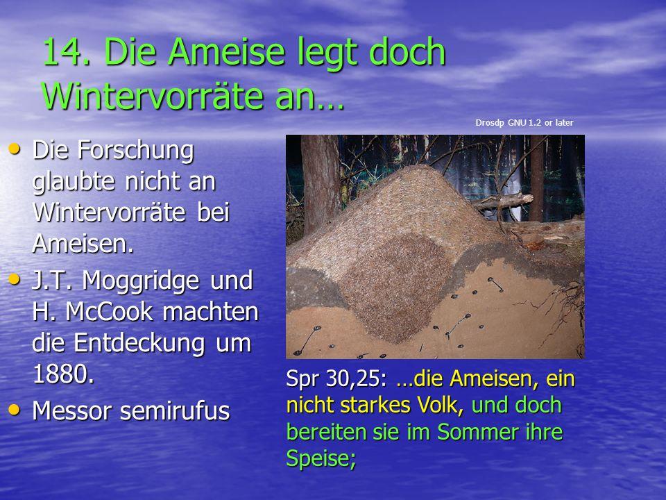 14. Die Ameise legt doch Wintervorräte an… Die Forschung glaubte nicht an Wintervorräte bei Ameisen. Die Forschung glaubte nicht an Wintervorräte bei