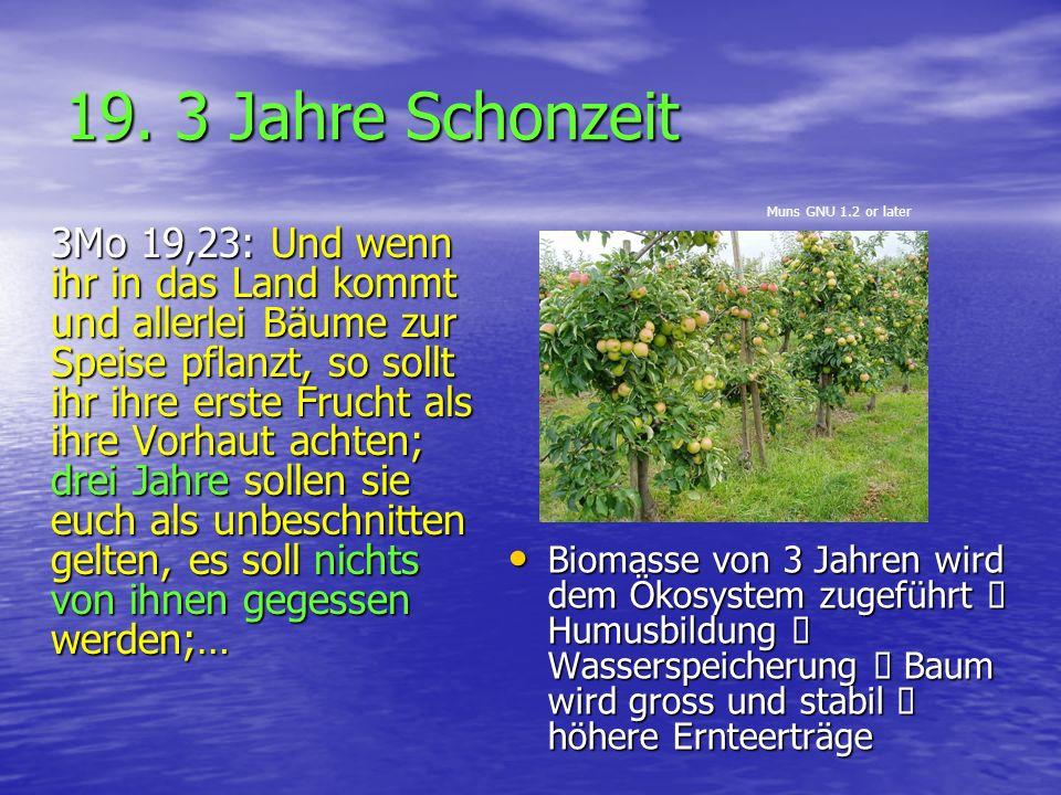 19. 3 Jahre Schonzeit 3Mo 19,23: Und wenn ihr in das Land kommt und allerlei Bäume zur Speise pflanzt, so sollt ihr ihre erste Frucht als ihre Vorhaut