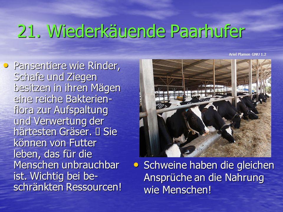 21. Wiederkäuende Paarhufer Schweine haben die gleichen Ansprüche an die Nahrung wie Menschen! Schweine haben die gleichen Ansprüche an die Nahrung wi
