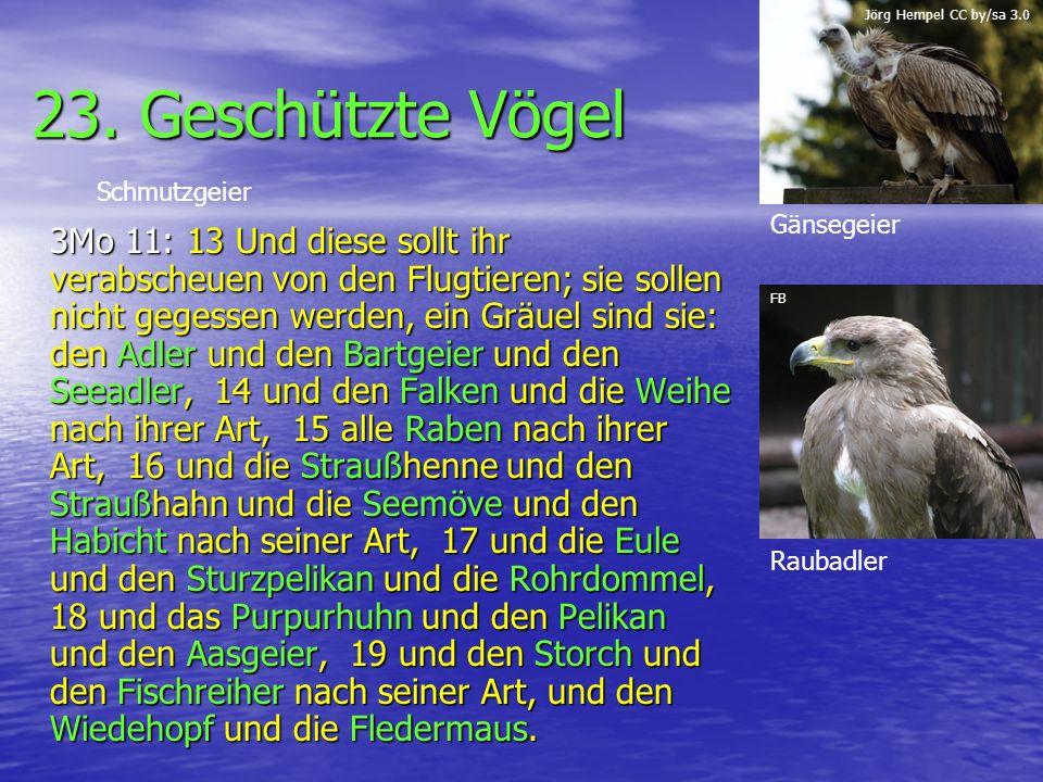 23. Geschützte Vögel 3Mo 11: 13 Und diese sollt ihr verabscheuen von den Flugtieren; sie sollen nicht gegessen werden, ein Gräuel sind sie: den Adler