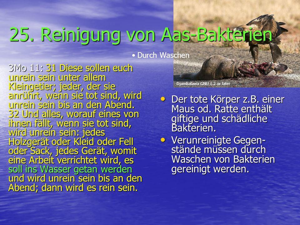 25. Reinigung von Aas-Bakterien 3Mo 11: 31 Diese sollen euch unrein sein unter allem Kleingetier; jeder, der sie anrührt, wenn sie tot sind, wird unre