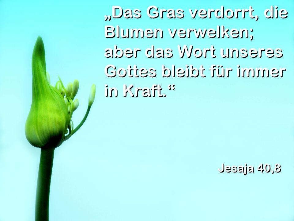 Das Gras verdorrt, die Blumen verwelken; aber das Wort unseres Gottes bleibt für immer in Kraft. Jesaja 40,8
