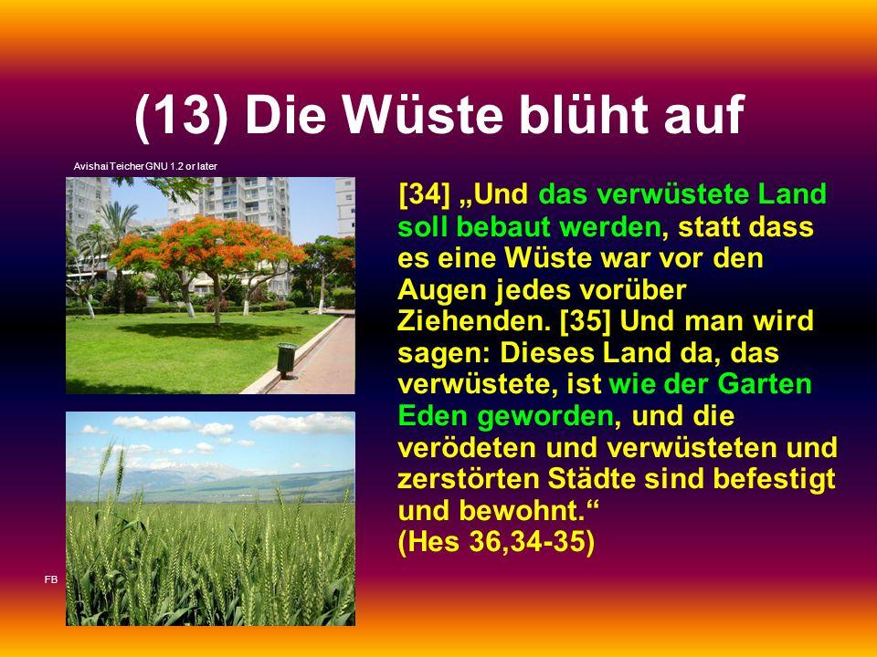(13) Die Wüste blüht auf [34] Und das verwüstete Land soll bebaut werden, statt dass es eine Wüste war vor den Augen jedes vorüber Ziehenden. [35] Und