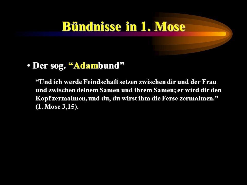 Bündnisse in 1. Mose Der sog. Adambund Und ich werde Feindschaft setzen zwischen dir und der Frau und zwischen deinem Samen und ihrem Samen; er wird d