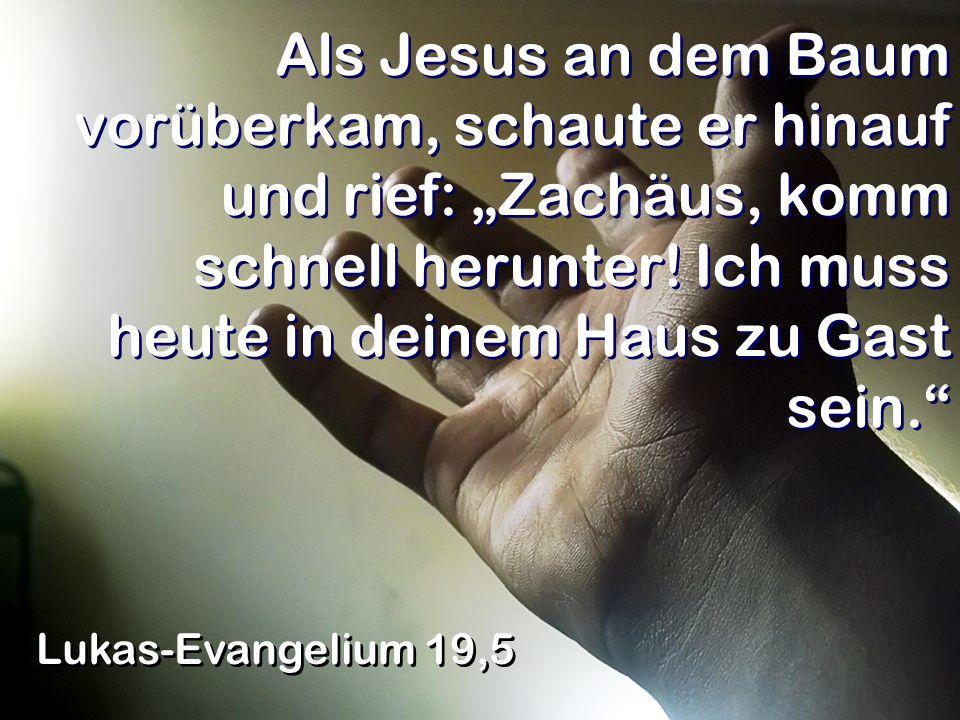 Als Jesus an dem Baum vorüberkam, schaute er hinauf und rief: Zachäus, komm schnell herunter! Ich muss heute in deinem Haus zu Gast sein. Lukas-Evange