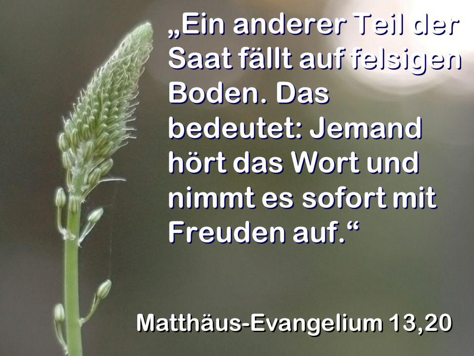 Ein anderer Teil der Saat fällt auf felsigen Boden. Das bedeutet: Jemand hört das Wort und nimmt es sofort mit Freuden auf. Matthäus-Evangelium 13,20