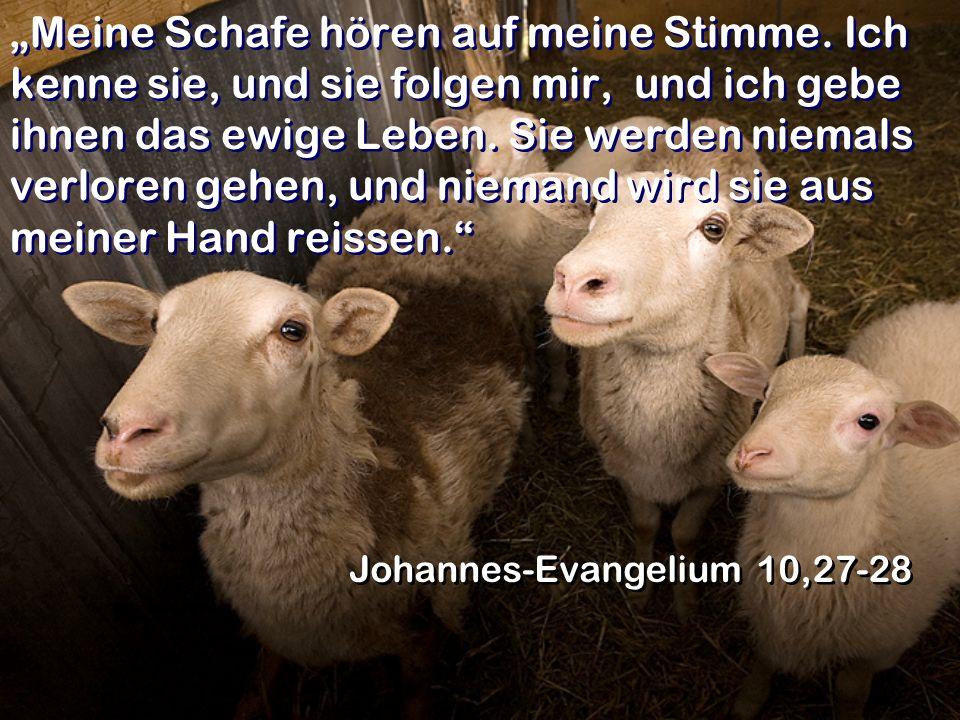 Meine Schafe hören auf meine Stimme. Ich kenne sie, und sie folgen mir, und ich gebe ihnen das ewige Leben. Sie werden niemals verloren gehen, und nie