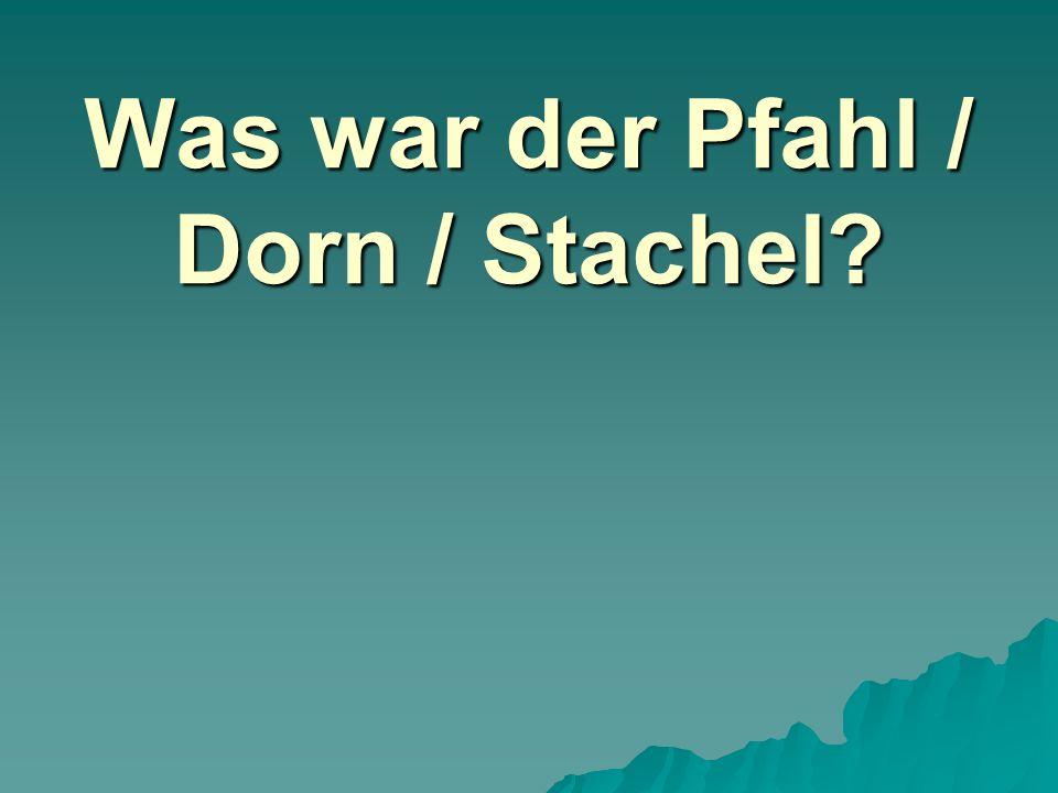Was war der Pfahl / Dorn / Stachel?