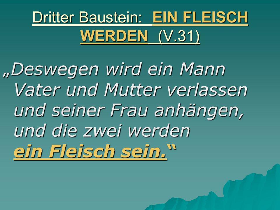 Dritter Baustein: EIN FLEISCH WERDEN (V.31) Deswegen wird ein Mann Vater und Mutter verlassen und seiner Frau anhängen, und die zwei werden ein Fleisc
