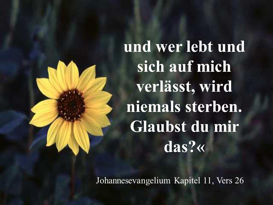 und wer lebt und sich auf mich verlässt, wird niemals sterben. Glaubst du mir das?« Johannesevangelium Kapitel 11, Vers 26