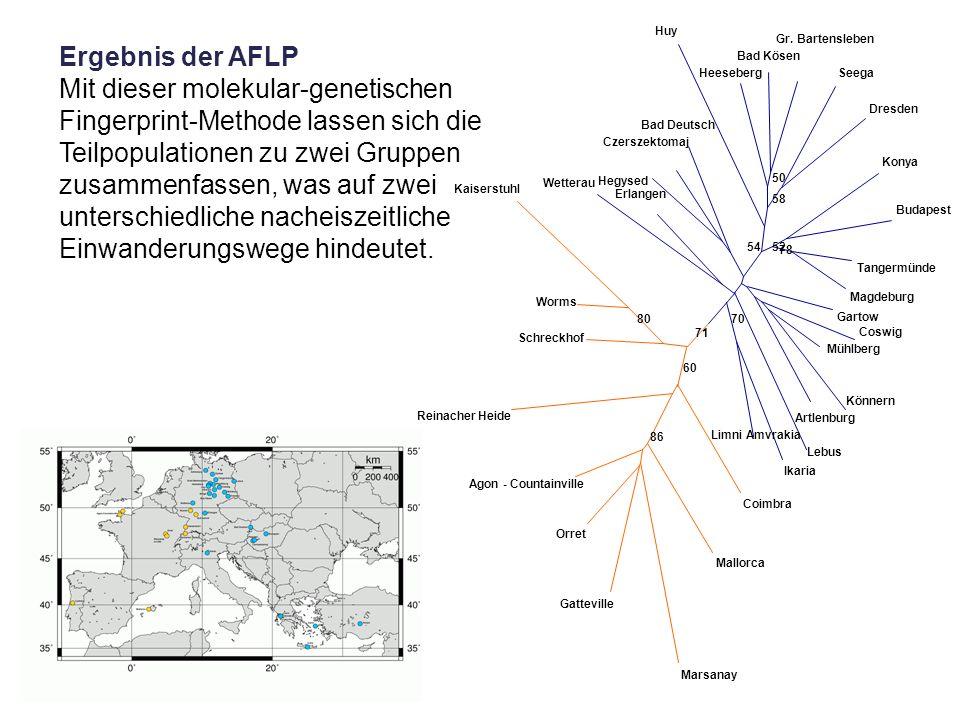 Ergebnis der AFLP Mit dieser molekular-genetischen Fingerprint-Methode lassen sich die Teilpopulationen zu zwei Gruppen zusammenfassen, was auf zwei u