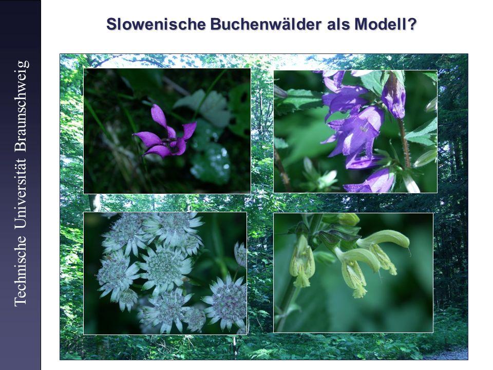Technische Universität Braunschweig Slowenische Buchenwälder als Modell?