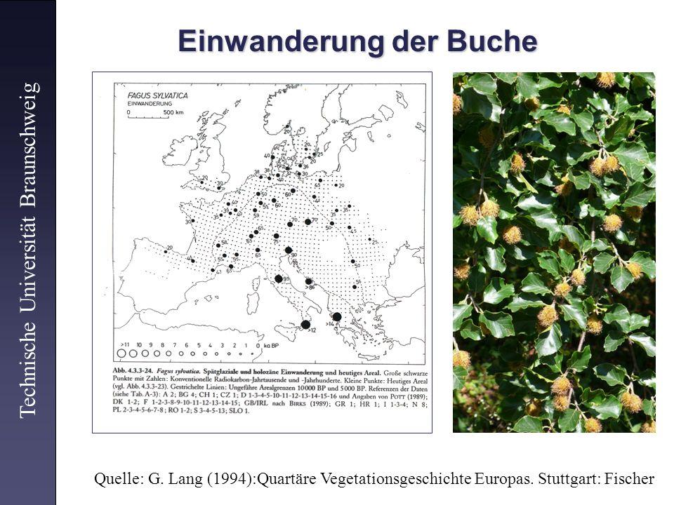 Einwanderung der Buche Einwanderung der Buche Technische Universität Braunschweig Quelle: G. Lang (1994):Quartäre Vegetationsgeschichte Europas. Stutt