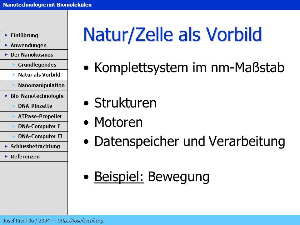 Nanotechnologie mit Biomolekülen Josef Riedl 06 / 2004 http://josef.riedl.org Natur/Zelle als Vorbild Komplettsystem im nm-Maßstab Strukturen Motoren