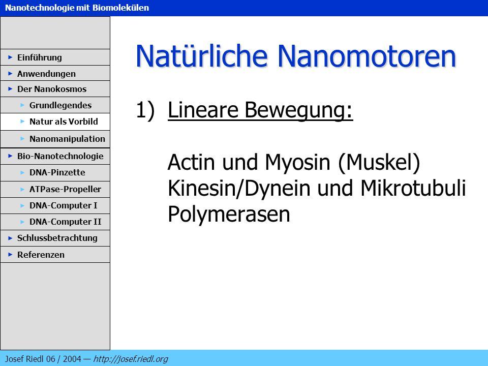 Nanotechnologie mit Biomolekülen Josef Riedl 06 / 2004 http://josef.riedl.org Natürliche Nanomotoren 1)Lineare Bewegung: Actin und Myosin (Muskel) Kin