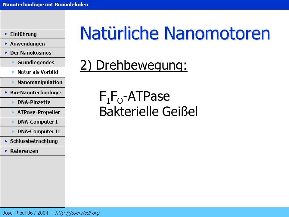 Nanotechnologie mit Biomolekülen Josef Riedl 06 / 2004 http://josef.riedl.org Natürliche Nanomotoren 2) Drehbewegung: F 1 F O -ATPase Bakterielle Geiß