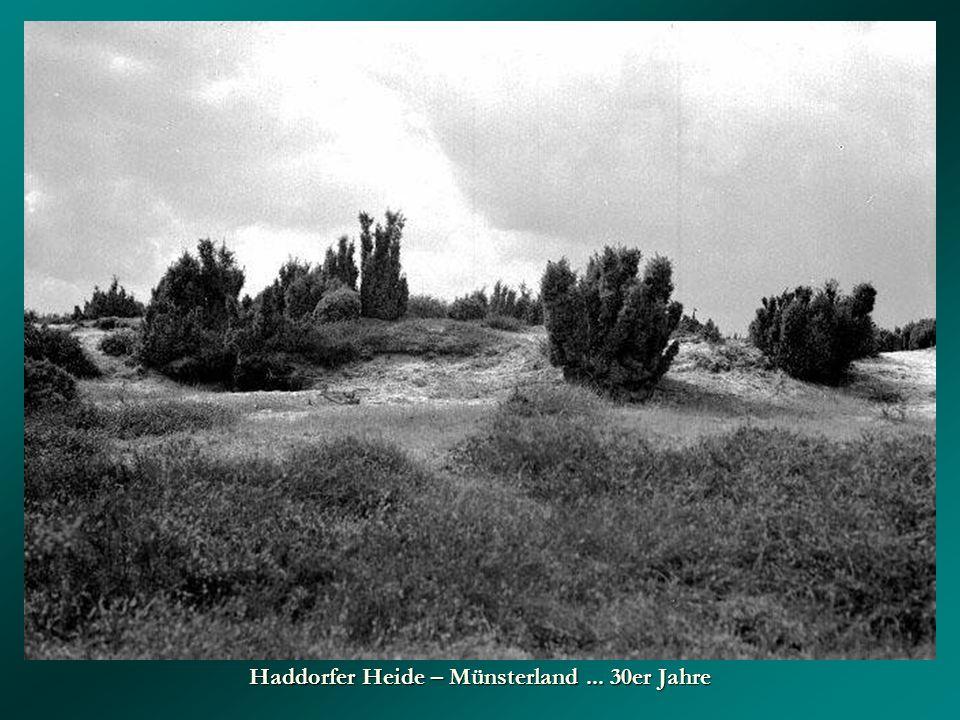 Haddorfer Heide – Münsterland... 30er Jahre