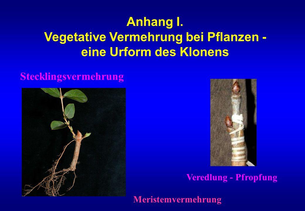 Anhang I. Vegetative Vermehrung bei Pflanzen - eine Urform des Klonens Stecklingsvermehrung Veredlung - Pfropfung Meristemvermehrung