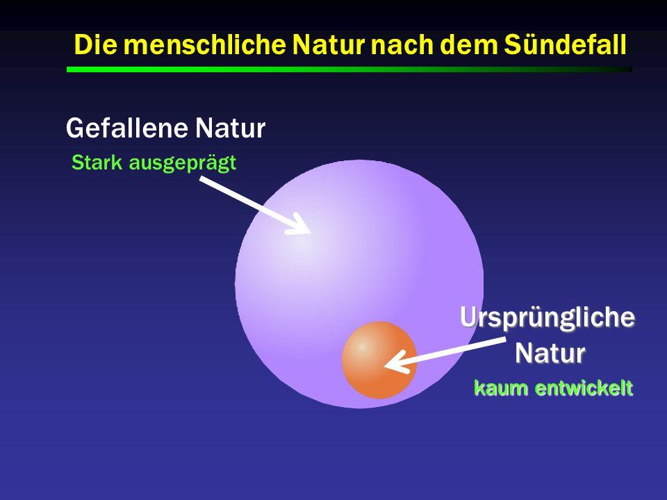 Gefallene Natur Stark ausgeprägt UrsprünglicheNatur kaum entwickelt kaum entwickelt Die menschliche Natur nach dem Sündefall